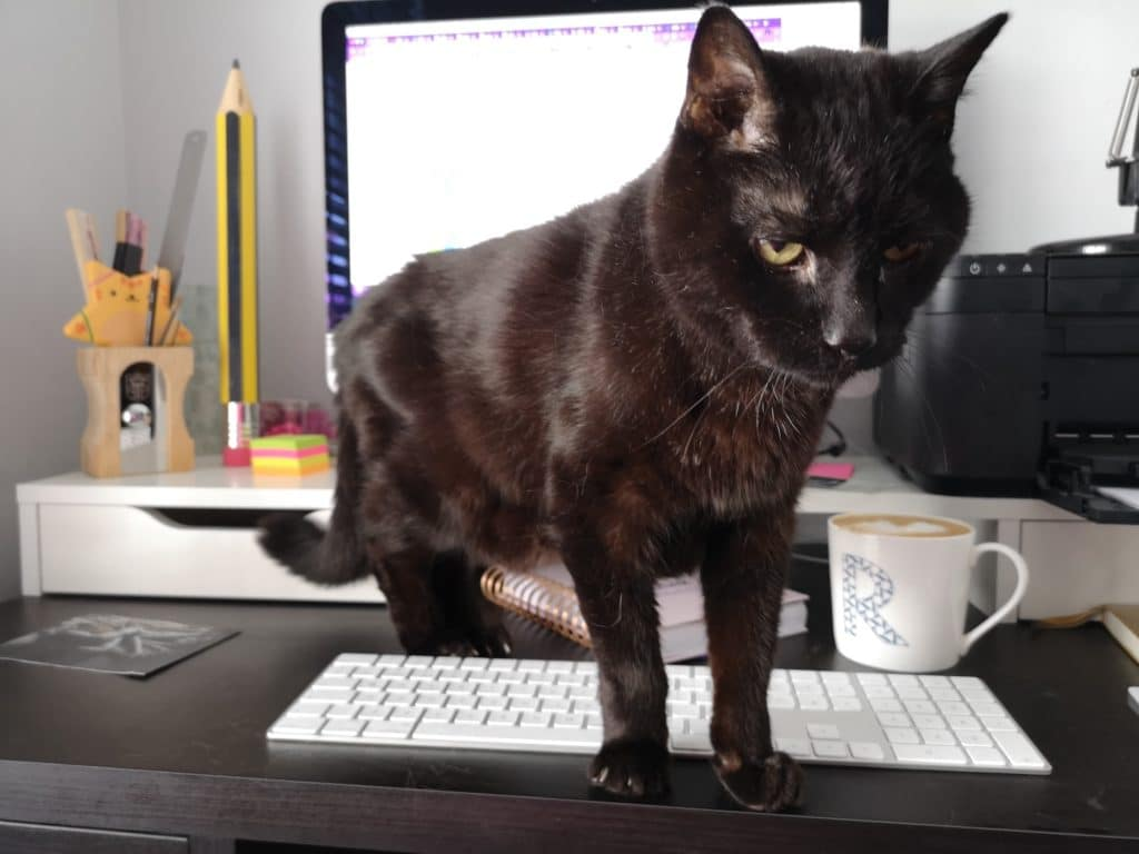 Our marketing managers cat doing an excellent job supervising as she works from home
