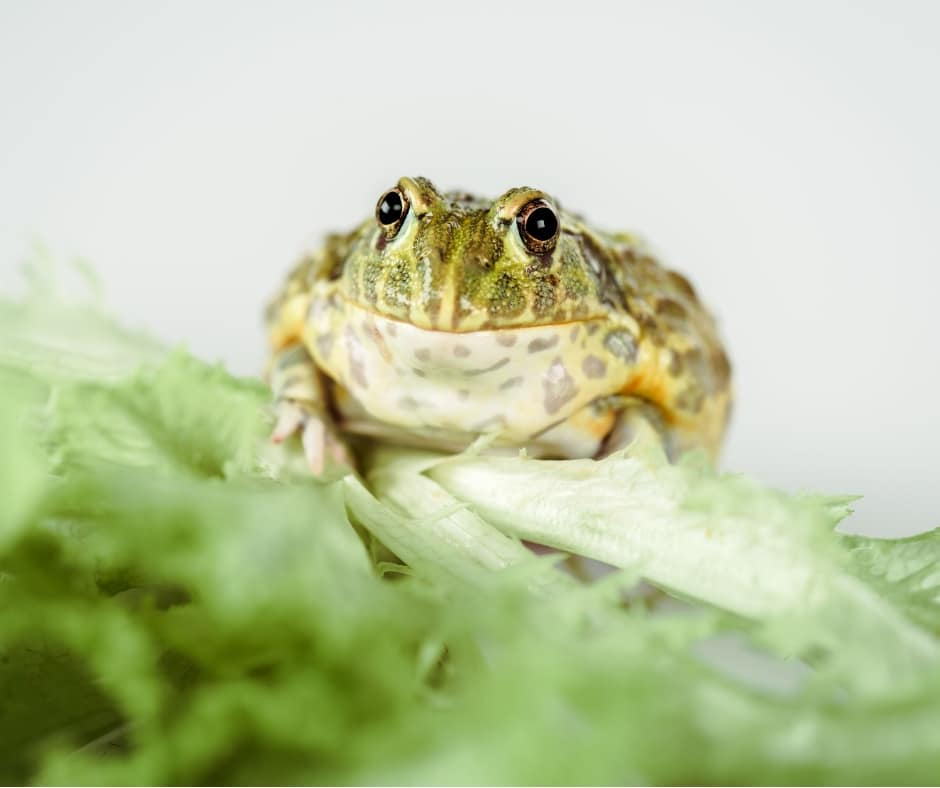 An ugly frog. A common euphemism for  completing difficult tasks first - just one of our tips for how to be productive when you work from home