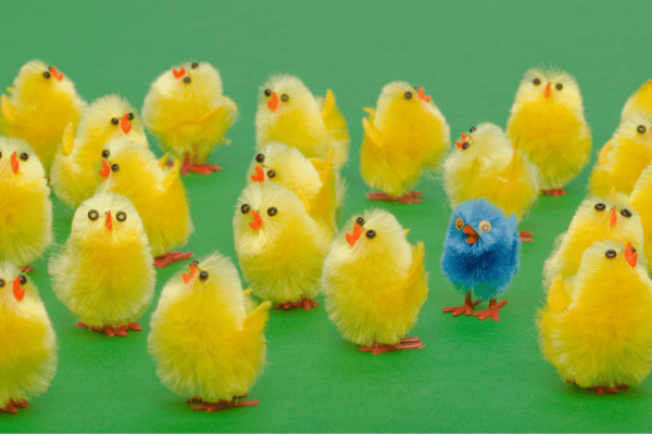 Can this blue chick be a good culture fit among its yellow team mates?